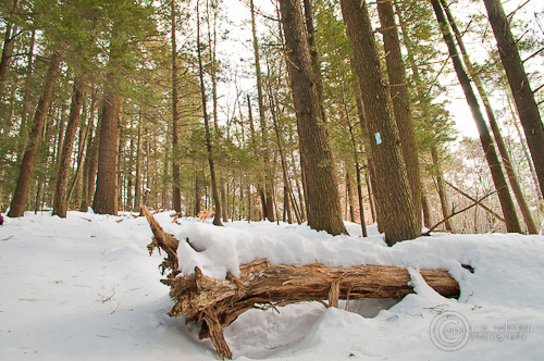 CT Video Hikes: Cathedral Pines Preserve