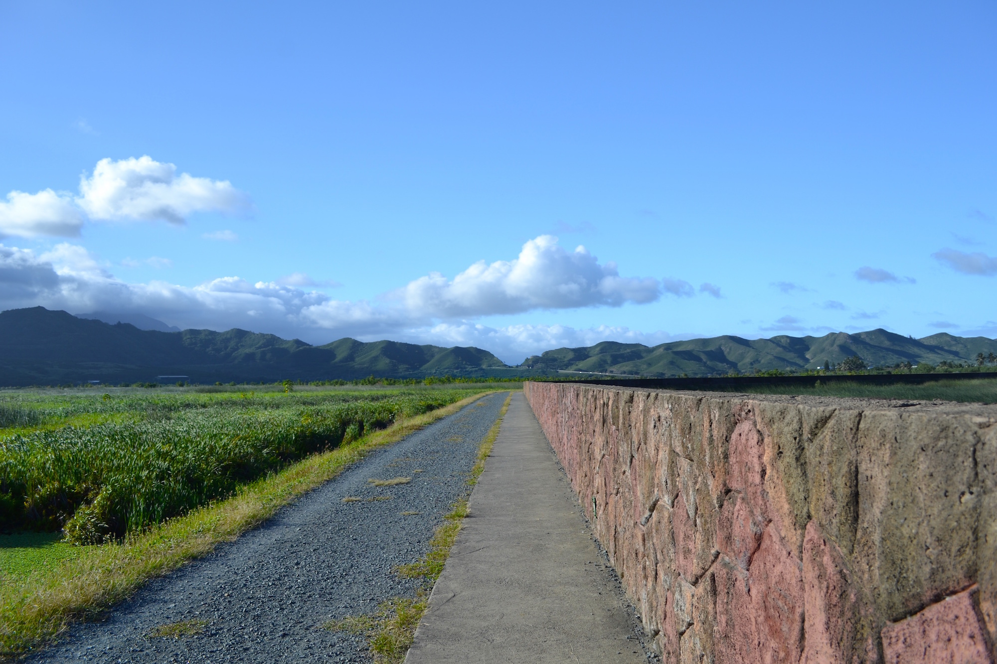 Kawainui Marsh Trail